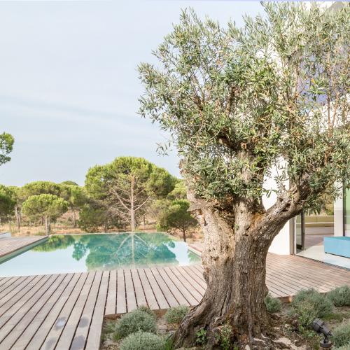 private pool oliveirascomporta mod