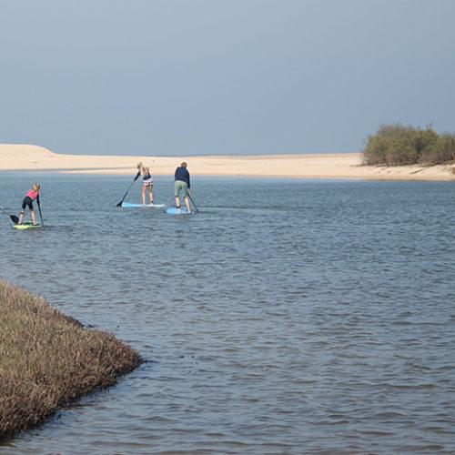 paddle comporta
