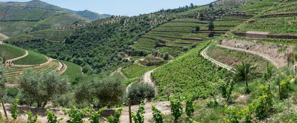 Quinta do Torto vineyard views